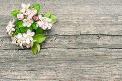 Λουλούδια άνοιξη ανθών δέντρων της Apple Στοκ εικόνα με δικαίωμα ελεύθερης χρήσης