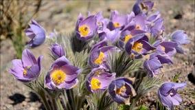 Λουλούδια άνοιξη με τις μέλισσες και birdsong απόθεμα βίντεο