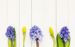 Λουλούδια άνοιξη πέρα από τον άσπρο ξύλινο πίνακα Στοκ εικόνα με δικαίωμα ελεύθερης χρήσης