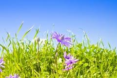 Λουλούδια άνοιξη σε έναν άγριο τομέα χλόης - εικόνα με το διάστημα αντιγράφων Στοκ Εικόνα
