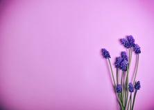 Λουλούδια άνοιξη σε μια ρόδινη επιφάνεια Στοκ εικόνα με δικαίωμα ελεύθερης χρήσης