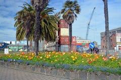 Λουλούδια άνοιξη στην εγκαταλειμμένη πόλη CBD Christchurch Στοκ Φωτογραφία
