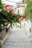Λουλούδια άνοιξη στην οδό της Κέρκυρας Ελλάδα Στοκ Εικόνα