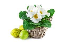 Λουλούδια άνοιξη στο καλάθι και τα αυγά Πάσχας, στο λευκό Στοκ Εικόνες