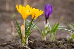 Λουλούδια άνοιξη στο κρεβάτι Στοκ φωτογραφία με δικαίωμα ελεύθερης χρήσης