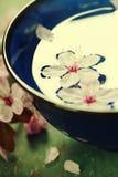 Λουλούδια άνοιξη στο μπλε κύπελλο Στοκ Εικόνα