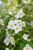 Λουλούδια άνοιξη στο πράσινο δάσος Στοκ Φωτογραφίες