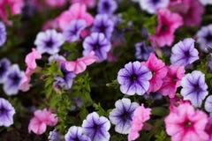 Λουλούδια άνοιξη Στοκ φωτογραφία με δικαίωμα ελεύθερης χρήσης