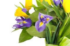 Λουλούδια άνοιξη Στοκ εικόνες με δικαίωμα ελεύθερης χρήσης