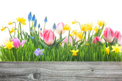 Λουλούδια άνοιξη