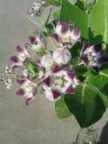 Λουλούδια άσπρα και ρόδινα Στοκ Εικόνες