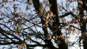 Λουλούδια δέντρων κλάδων ήλιων φιλμ μικρού μήκους