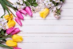 Λουλούδια δέντρων της Apple και ρόδινες και κίτρινες τουλίπες άσπρο σε ξύλινο Στοκ Εικόνα