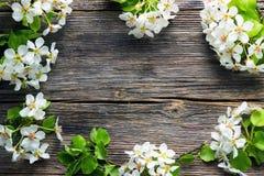 Λουλούδια δέντρων της Apple στον ξύλινο πίνακα Στοκ φωτογραφία με δικαίωμα ελεύθερης χρήσης