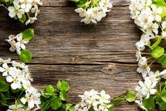 Λουλούδια δέντρων της Apple στον ξύλινο πίνακα Στοκ Φωτογραφίες