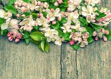 Λουλούδια δέντρων της Apple στο ξύλινο υπόβαθρο Στοκ εικόνα με δικαίωμα ελεύθερης χρήσης