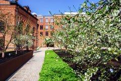 Λουλούδια δέντρων της Apple στο πάρκο πόλεων Στοκ φωτογραφίες με δικαίωμα ελεύθερης χρήσης