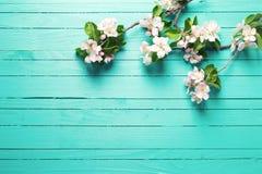 Λουλούδια δέντρων της Apple στο φωτεινό τυρκουάζ ξύλινο υπόβαθρο Στοκ εικόνες με δικαίωμα ελεύθερης χρήσης