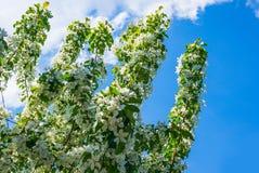 Λουλούδια δέντρων της Apple Τ Στοκ φωτογραφία με δικαίωμα ελεύθερης χρήσης