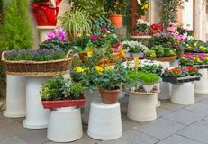 Λουλούδια έξω από το ανθοπωλείο Στοκ Εικόνες