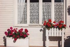 Λουλούδια έξω από το παράθυρο σπιτιών Στοκ φωτογραφία με δικαίωμα ελεύθερης χρήσης