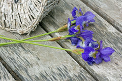 Λουλούδια ίριδων Στοκ Εικόνες
