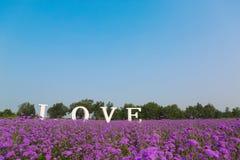 Λουλούδια αγάπης στοκ εικόνα με δικαίωμα ελεύθερης χρήσης