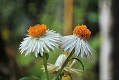 Λουλούδια αγάπης Στοκ Εικόνες