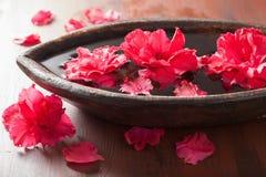 Λουλούδια αζαλεών στο κύπελλο για τη aromatherapy SPA Στοκ Φωτογραφίες