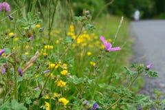 Λουλούδια ακρών του δρόμου Στοκ φωτογραφία με δικαίωμα ελεύθερης χρήσης