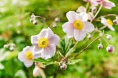 Λουλούδια, αναμμένα από το φως του ήλιου στον κήπο Στοκ φωτογραφίες με δικαίωμα ελεύθερης χρήσης