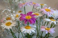 Λουλούδια ανθοδεσμών της Daisy Στοκ φωτογραφίες με δικαίωμα ελεύθερης χρήσης