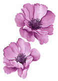 Λουλούδια απεικόνισης Watercolor διανυσματική απεικόνιση