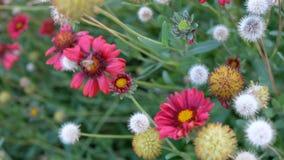 Λουλούδια από την ακτή Στοκ φωτογραφίες με δικαίωμα ελεύθερης χρήσης