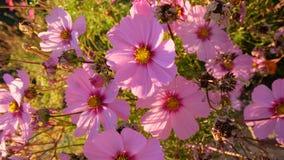 Λουλούδια από την ακτή Στοκ Φωτογραφία