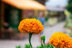 Λουλούδια από την Οδησσός Στοκ Εικόνες