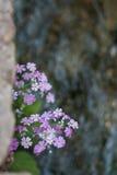 Λουλούδια από τον ποταμό Στοκ Φωτογραφία