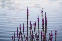 Λουλούδια από το νερό Στοκ φωτογραφίες με δικαίωμα ελεύθερης χρήσης