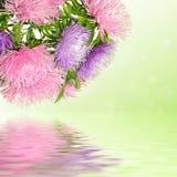 Λουλούδια αστέρων στοκ εικόνες