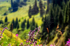 Λουλούδια βουνών ιστών αράχνης Στοκ φωτογραφία με δικαίωμα ελεύθερης χρήσης