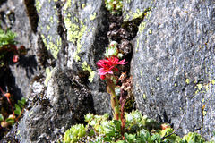 Λουλούδια βουνών Στοκ φωτογραφία με δικαίωμα ελεύθερης χρήσης