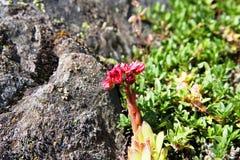 Λουλούδια βουνών Στοκ φωτογραφίες με δικαίωμα ελεύθερης χρήσης