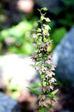 Λουλούδια βουνών Στοκ Φωτογραφίες