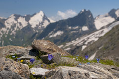 Λουλούδια βουνών Στοκ εικόνα με δικαίωμα ελεύθερης χρήσης