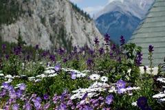 Λουλούδια βουνών στοκ εικόνες