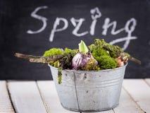 Λουλούδια βρύου και βολβών Στοκ φωτογραφία με δικαίωμα ελεύθερης χρήσης