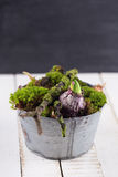 Λουλούδια βρύου και βολβών Στοκ εικόνα με δικαίωμα ελεύθερης χρήσης