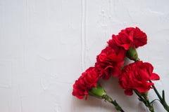 Λουλούδια γαρίφαλων και κορδέλλα του George στο αφηρημένο ελαφρύ υπόβαθρο η ημέρα 9 ημερολογίων μπορεί κόκκινη νίκη Ιωβηλαίο 70 έ Στοκ Εικόνες