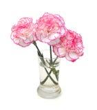 Λουλούδια γαρίφαλων Στοκ Φωτογραφία
