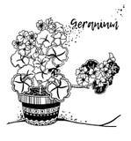 Λουλούδια γερανιών hygge Στοκ φωτογραφία με δικαίωμα ελεύθερης χρήσης
